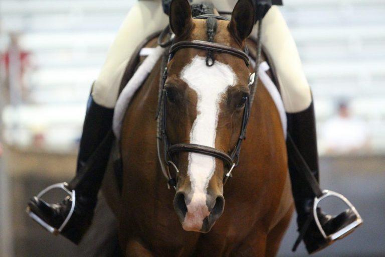 AQHA Youth World Cup 2014 - Hunter Under Saddle